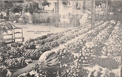 Promotional postcard of South Australian Fruit - circa 1908 (Aussie~mobs) Tags: vintage southaustralia government promotional 1908 fruit produce crops aussiemobs