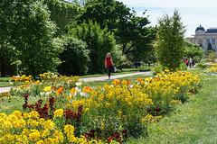 DSC03492-Lr (slam.photo) Tags: paris spring printemps