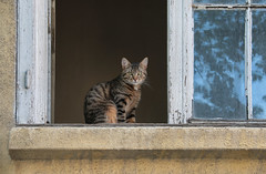 All old (Dragan*) Tags: cat animal pet feline eyes portrait window wood house glass reflection sky leaves outdoor wall tabby
