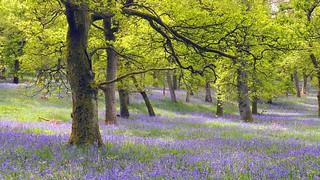 Woodland Trust Kinclaven.