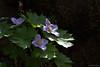 _NCL6136-Edit (chitoroid) Tags: nikond750 afpnikkor70300mmf4556eedvr japan hokkaido sapporo flower