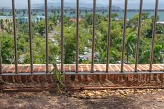 Iguana Overlook (ep_jhu) Tags: oldsanjuan reptile x100f lizard viejosanjuan iguana overlook caribbean osj puertorico bricks park sanjuan fuji fujifilm pr