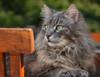 Sunday morning activities (FocusPocus Photography) Tags: fynn fynnegan katze kater cat chat gato tier animal haustier pet