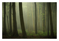 Friston Forest - June 1st (Edd Allen) Tags: forest trees tree treescape mist nikond610 nikon d610 70200mm landscape country countryside atmosphere atmospheric sunrise uk eastsussex woods woodland serene bucolic melancholy foliage leaves fristonforest fog spring