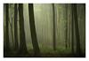 Friston Forest - June 1st (Edd Allen) Tags: forest trees tree treescape mist nikond610 nikon d610 70200mm landscape country countryside atmosphere atmospheric sunrise uk eastsussex woods woodland serene bucolic melancholy foliage leaves fristonforest fog spring