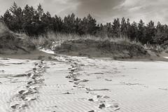 Traces on the sand (bożenabożena) Tags: landscape sand grass sky beach sea baltic summer morze bałtyk plaża lato piasek krajobraz trawa poland 2018