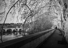 _DSC5356-1 (Giuseppe Cocchieri) Tags: bw blackwhite blackandwhite biancoenero bianconero street streetphoto streetphotography allaperto alberi trees