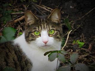 Lovely green eyed cat