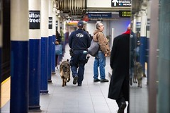 Walkthrough of Fulton Station with the New York City Police department K-9 unit on Tuesday, April 10, 2018. Benjamin Kanter/Mayoral Photo Office. (nycmayorsoffice) Tags: canine k9 k9unit manhattan nyc newyork newyorkcity newyorkcitypolicedepartment newyorkcounty pd subwaycar subwayplatform transitbureau cop cops dog nypd police subway train walkthrough
