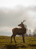 The Stag (Kris Black) Tags: highland wildlife park canon 70300mm 1770mm sigma stag glen zoo horn
