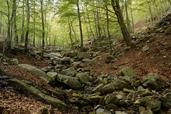 Riera de Passavets (Hachimaki123) Tags: paisaje landscape montseny parcnaturaldelmontseny río rio river riu rieradepassavets riera