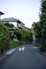 猫 (23fumi@fuyunofumi) Tags: ilce7rm3 sony 55mm sonnartfe55mmf18za neko katze gato cat chat street alley alleyway animal emount sonnar miyazaki a7r3 ねこ 猫 ソニー 路地 宮崎