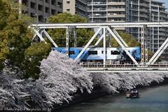 B8J_7115 (good_gintonic) Tags: sakuranomiya