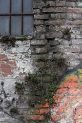 A Magic Wall (majamacanovic) Tags: wall brick bricks plant window windows urban art colors street glass
