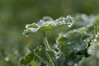 droplets (Emma Varley) Tags: droplets rain leaves green sparkle pretty rainbow
