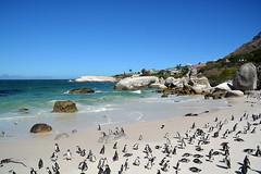 Boulders beach South Africa _6153 (ichauvel) Tags: manchots pingouins pinguins réservenaturelle plage beach bouldersbeach rochers rocks exterieur outside sable sand littoral afriquedusud southafrica afrique africa animaux animals voyage travel beautédelanature beautyofnature getty