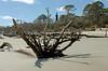 Hunting Island Liighthouse DSC_0850_01_edited-1 (John Dreyer) Tags: southcarolina lighthouse driftwood beach nikon nikond5100 photocreditjohnjdreyer copyright2018johnjdreyer