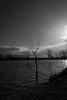 (Pablo Márquez Luis) Tags: bw blanco negro monocromatico monochrome river alagon coria españa extremadura