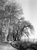 Mikkelborg (holtelars) Tags: pentax 645 pentax645 645n 6x45 smcpentaxfa 4585mm f45 120 film 120film foma fomapan fomapan200 fomapan200creative 125iso mediumformat analog analogue blackandwhite classicblackwhite bw monochrome filmforever ishootfilm filmphotography xtol homeprocessing larsholte denmark danmark mikkelborg