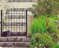 Spectator | Beobachter - Galilea, Mallorca (André-DD) Tags: mallorca majorca insel isle island mittelmeer mediterraneansea katze cat tier animal zaun fence treppen stairs galilea spanien spain espania
