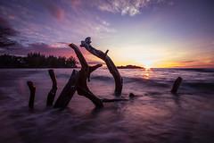 Fallen Branches (Sean Tbear) Tags: long exposure nature water ocean hawaii kona beach beaches sunset sun set blur sky