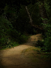 Where the breadcrumbs disappeared. (Read About Dave Barnett) Tags: path forest trail dark wood moody fairy tale fairytale redridinghood hood red riding