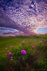 Lucky Charms (Phil~Koch) Tags: travel journey life mood emotions country outdoors colors living heaven weather horizons lines landscape field art meadow sky horizon sunset clouds wisconsin scenic vertical photography office portrait serene morning dawn nature natural earth environment inspired inspirational season beautiful hope love joy dramatic unity trending popular canon rural fineart arts shadow sun sunrise light peace shadows endless pastel spring flowers green blue purple violet wildflowers