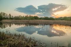 Double Cloud (Julian Barker) Tags: attenborough nature reseve nottingham nottinghamshire east midlands england great britain uk water still tranquil serene reflection sunset dusk calm canon dslr 5d mkii