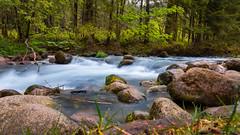 creek (keriarpi) Tags: creek water forest mountain poland tree blue green slow motion longexposure long exposure rock
