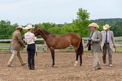 JBC_4943.jpg (Jim Babbage) Tags: krahc horseshow appaloosa horses 2018