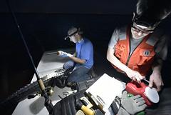 (FWC Research) Tags: alligator alligatorresearch mercurymonitoringproject biopsy sampling fieldwork measurements