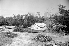 041269 10 (ndpa / s. lundeen, archivist) Tags: nick dewolf nickdewolf blackwhite photographbynickdewolf bw 1969 1960s 35mm film monochrome blackandwhite april usvi virginislands usvirginislands stthomas caribbean tree trees brush watersedge boat beached boats