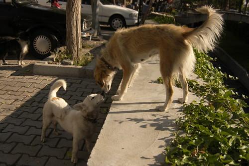 Dogs, Göreme