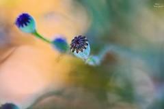 Desenfoque (Peideluo) Tags: nikon primavera spring naturaleza macro bokeh macrof macrofotografía planta