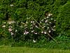 DSC04043 (bratispixl) Tags: fotosafari oberbayern germany bratispixl tele lichtwechsel schärfentiefe fokussierung bergwelt spot outdoor indoor architektur landschaft grat hügel wasser sonnenfotografie see flus tiere insekten nature nigth day spuren blumen wolken windspuren atemluft working