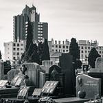 human habitats versus cemetery thumbnail