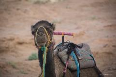 Vallee du Draa © Sophie Bigo - SBGD 2018-31 (SBGD_SophieBigo) Tags: photography artdirector freelance sophiebigo maroc trip travelphotography traveler trek morocco light