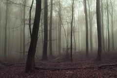 Pink Wood (Netsrak) Tags: baum bäume eu europa europe forst januar january landschaft natur nebel wald fog forest landscape mist nature tree trees winter woods rheinbach nordrheinwestfalen deutschland de