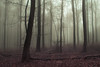 Pink Wood (Netsrak) Tags: baum bäume eu europa europe forst januar january landschaft natur nebel wald fog forest landscape mist nature tree trees winter woods rheinbach nordrheinwestfalen deutschland de