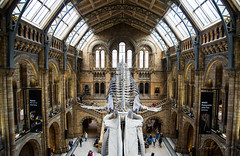 London Museums: Natural History Museum (rfabregat) Tags: london londres museum architecture travel travelphotography nikon nikond750 d750 nikkor