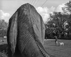 Brontosaurus Interruptus (macromary) Tags: 120 120film analog florida pentax6x7 mediumformat foma fomapan fomapan100 blackwhite analogphotograph bokeh bw blackandwhitefilm filmcamera film mechanicalcamera vintage vintagecamera nwflorida 105mm f24 rodinal urbex rurex flurbex hernandocounty dinosaur roadsideattraction abandoned sculpture concretesculpture history floridahistory flhistory herwede augustherwede