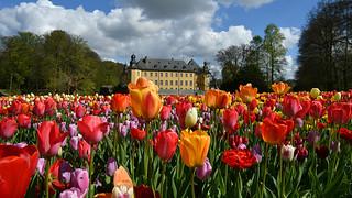 Tulpenblüte im Park von Schloss Dyck