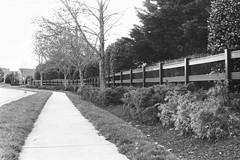 Leica M5 - Voigtlander 50mm f/1.5 (A.C.Bya) Tags: bw 35mm film filmisnotdead grayscale ilford nokton leicam5 leica monochrome street sky voigtlander road tree grass path sidewalk lines leading