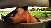 Goat-eye thru a fish-eye lens (André Felipe Carvalho) Tags: goat cabra zaanche schaans netherlands holanda moinhos