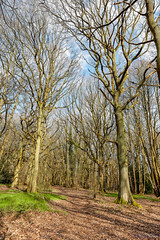 Piles Coppice 14th April 2018 (boddle (Steve Hart)) Tags: piles coppice 14th april 2018 wild wilds wildlife life nature natural bird birds flowers flower fungii fungus insect insects spiders butterfly moth butterflies moths creepy crawley winter spring summer autumn seasons sunset weather sun sky cloud clouds panoramic landscape steve hart boddle steven bruce wyke road wyken coventry united kingdon england great britain canon 5d mk4 6d 100400mm is usm ii 2470mm standard 85mm f14 prime binleywoods unitedkingdom gb