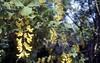 Primavera (michele.palombi) Tags: spring tuscany film analogic colortec negativo colore 35mm kodak portra800 olympus om1