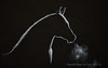How to Draw a Horse Silhouette With Backlighting - Narrated (fineart-tips) Tags: drawing art finearttips horse silhouette monochrome tutorial artistleonardo leonardopereznieto patreon