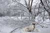 Snowshoe rabbit (Nelley) Tags: snowshoerabbit winterday cold trees nature winter frostywindow