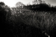 (Levdad) Tags: river weaver reed beds sunlight backlighting silhouette northwhich fujifilm xt20