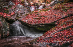 Red Leaf Waterfall (tclaud2002) Tags: water waterfall leaves red autumn rocks rocky mountain stream mountainstream landscape rural country brook nature mothernature northcarolina andrews outdoors greatoutdoors usa